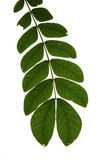 Tropical leaf Stock Images