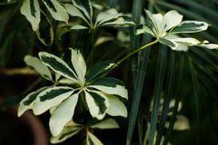 Tropical leaf forest glow in the dark background. High contrast stock photography