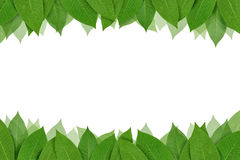 Tropical leaf frame Stock Photography