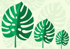 Tropical Leaf Monstera Plant isolated on light green background. Vector Illustration.  Royalty Free Stock Images