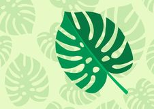 Tropical Leaf Monstera Plant isolated on light green background. Vector Illustration.  Royalty Free Stock Photography