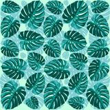 Tropical Leaf Monstera Plant Pattern Royalty Free Stock Image