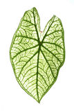 Tropical leaf Stock Photos