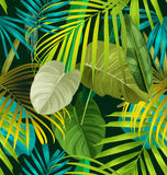 Tropical leaf pattern Royalty Free Stock Photography