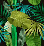 Tropical leaf pattern. Tropical palm leaves pattern poster Stock Photography