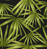 Tropical leaf pattern Stock Images