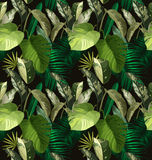 Tropical leaf pattern Royalty Free Stock Image