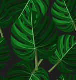 Tropical leaf pattern Royalty Free Stock Images