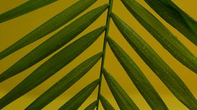 Tropical leaf with rain drops on, green plant, environment, rainforest nature. Stock photo stock images