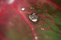 Tropical Leaf with rain drops stock images
