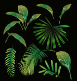 Tropical leaf set Royalty Free Stock Photos