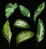 Tropical leaf set Stock Photo