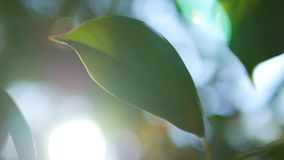 Tropical leaf, super close-up. on blurred background of foliage and sky. sun glare, bokeh royalty free illustration