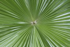 Tropical leaf symmetry Stock Image