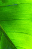 Tropical leaf texture Stock Images