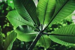 Tropical leaf texture Stock Photos
