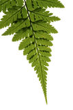 Tropical leaf Stock Image