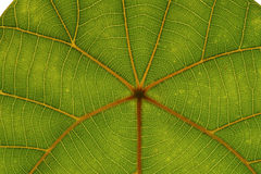 Tropical leaf Stock Photos