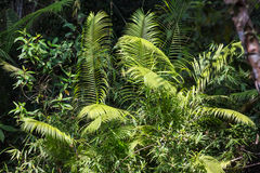 Tropical leafs Royalty Free Stock Images