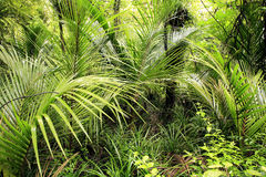 Tropical leaves Stock Images