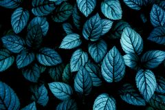 Tropical leaves, abstract green leaves textur