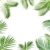 Tropical leaves, abstract green leaves texture, nature background