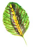 Tropical Leaves Art Royalty Free Illustration