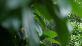 Tropical leaves background. Botanic garden leaf. Tropical leaves background Botanic garden leaf stock video footage