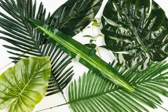 Tropical Leaves Background isolated on white stock photography