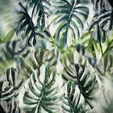Tropical leaves background. Monstera leaf texture stock photography
