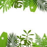 Tropical leaves background with palm,fern,monstera,acacia and banana leaves. Vector illustration Stock Images