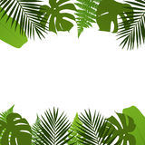 Tropical leaves background with palm,fern,monstera and banana leaves. Stock Photography