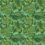Tropical Leaves Background Royalty Free Stock Photography