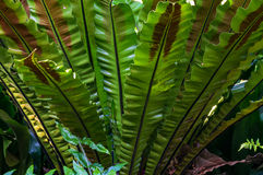 Tropical leaves background with selective focus Stock Image