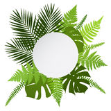 Tropical leaves background with white round banner. Palm,ferns,monsteras. Royalty Free Stock Image