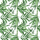 Tropical leaves bamboo tree pattern in a watercolor style. Royalty Free Stock Image