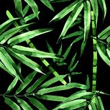 Tropical leaves bamboo tree pattern in a watercolor style. Royalty Free Stock Photography