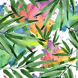 Tropical leaves bamboo tree pattern in a watercolor style. Stock Image