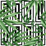 Tropical leaves bamboo tree pattern in a watercolor style. Stock Photography