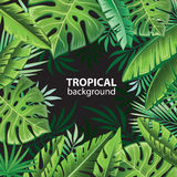 Tropical leaves on black Stock Photos