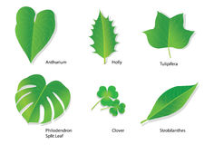 Tropical Leaves with Botanical names Royalty Free Stock Photography