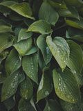 Tropical leaves close-up, Greenhouse, Atmospheric background, Se stock photos