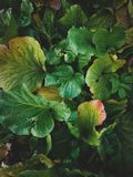 Tropical leaves close-up, Greenhouse, Atmospheric background, Se stock image