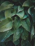 Tropical leaves close-up, Greenhouse, Atmospheric background, Se Royalty Free Stock Images