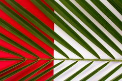 Tropical leaves, closeup. Colorful abstract background Stock Photography