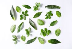 Tropical leaves collection Royalty Free Stock Photo