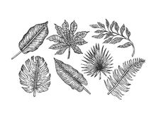 Tropical leaves collection. Engraved jungle leaves. Palm leaves. Royalty Free Stock Photos