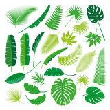 Tropical Leaves Collection, isolate vector. Big Set Royalty Free Stock Photos