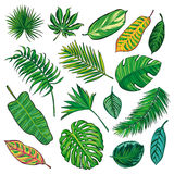 Tropical Leaves Collection, isolate vector.Big Set Stock Photography