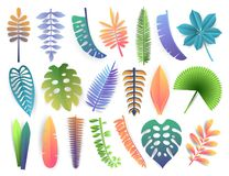 Tropical leaves collection. Trendy summer exotic palms, monstera, philodendron, kalatea, fern, orchid, banana, coconut. Tropical colorful leaves collection Royalty Free Stock Photos